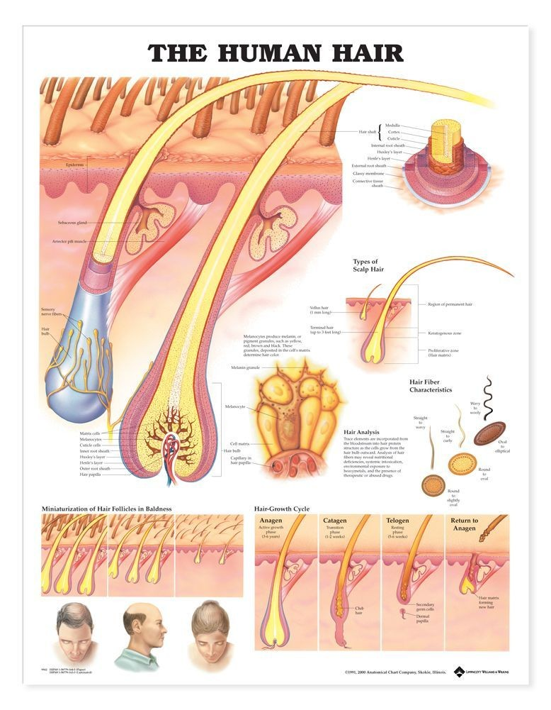Electrolysis Treatment (Essense Windsor) – Essense Aesthetic